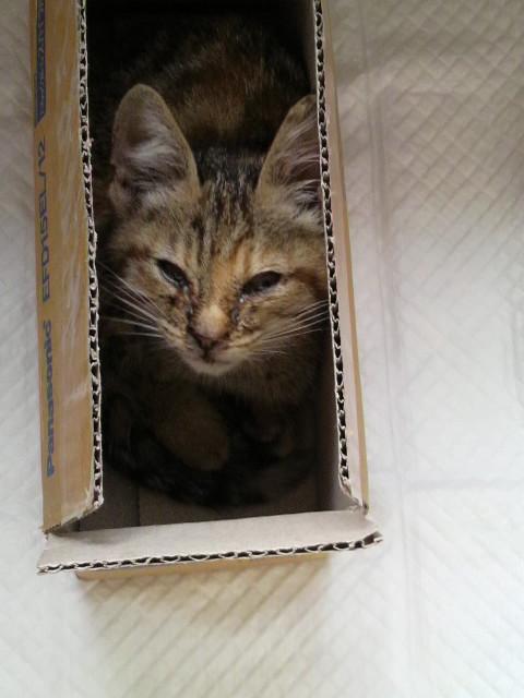 2011062010140000猫2