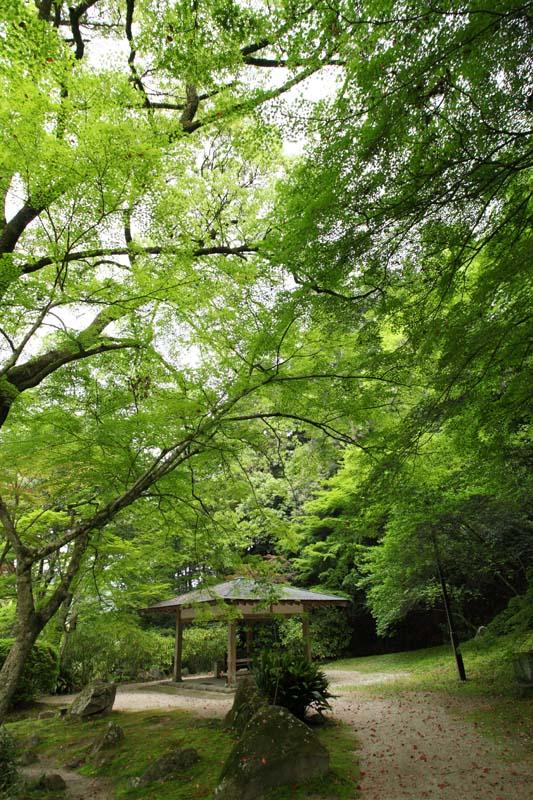 紅葉谷公園の新緑