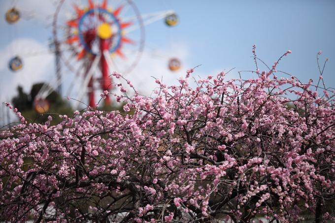 蜂ヶ峯公園