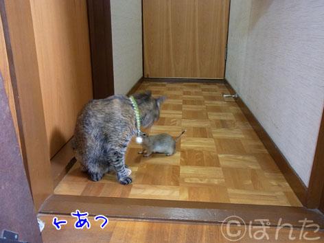 ぴきぴき_部屋んぽ5