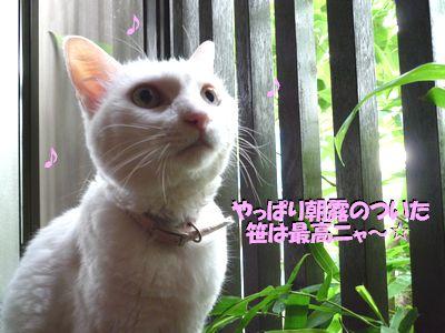 やっぱり朝露のついた笹は最高ニャ~☆