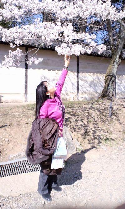 110405_1453~関西の桜_2
