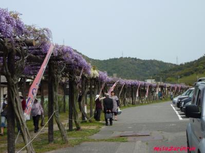 2011藤祭り23