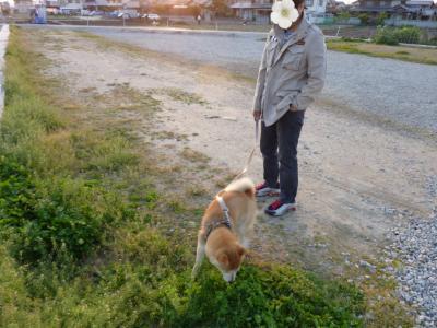 こう太散歩3