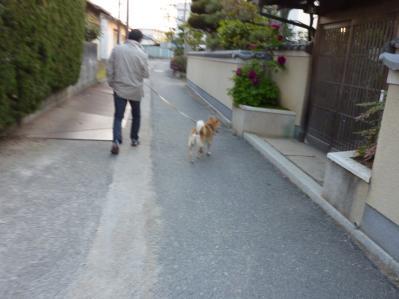 こう太散歩8