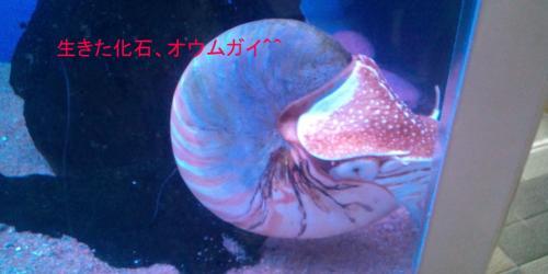 海水浴16