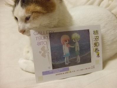 個展のDMと猫1
