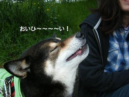 こいのぼり71