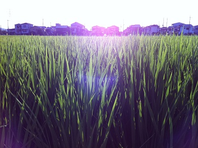 朝露キラキラ20110809