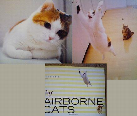 2007cats.jpg