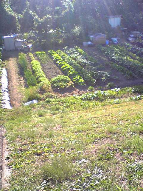 永井家庭菜園