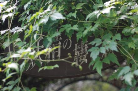 妖精の棲む森