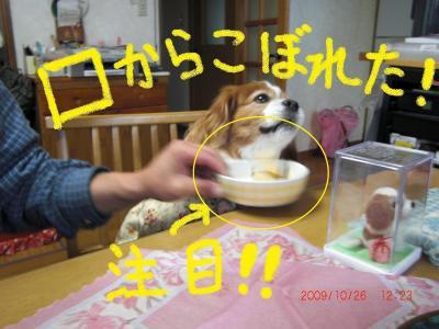 039+-繧ウ繝。繝ウ繝・convert_20091027102754