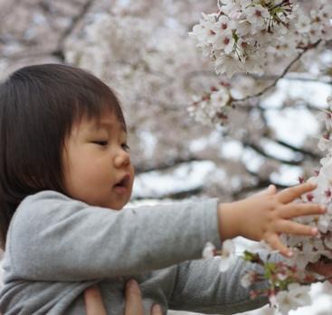 桜とひ~ちゃん♪