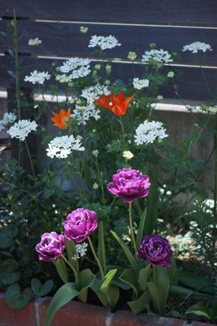 花壇も賑やかに~♪
