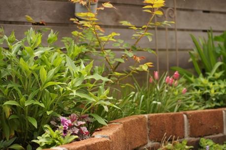 バラと宿根草の花壇