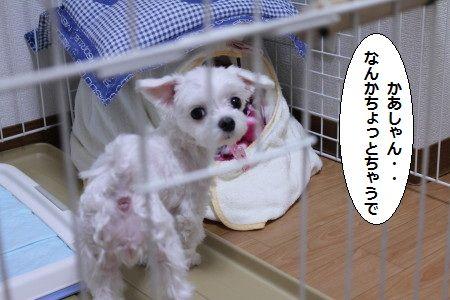 IMG_5105_1 kyoukarakoko 1