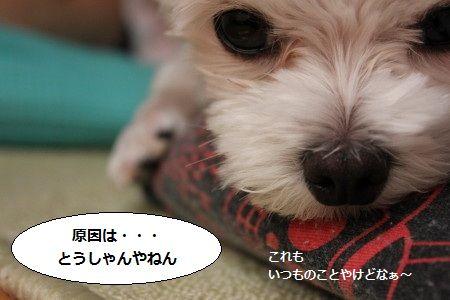 IMG_5808_1 げん 1