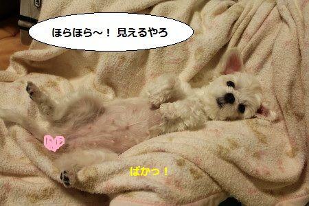 IMG_5998_1ほら 2