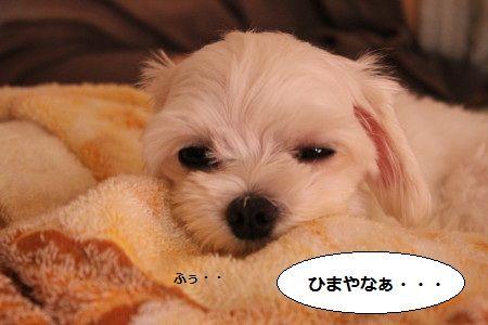 IMG_7119_1 ひま1