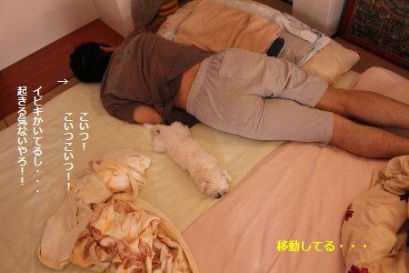 IMG_7137_1 こいつ