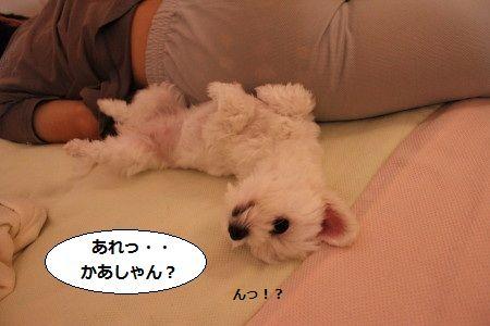 IMG_7156_1 あれ1