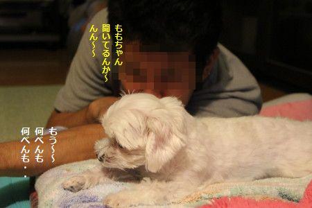 IMG_7230_1 なんべん1