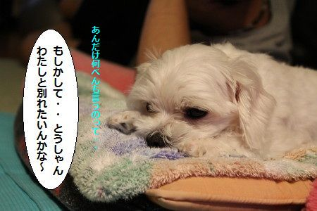 IMG_7233_1 wakare 2