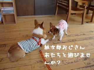 紋兄&ちくわちゃん