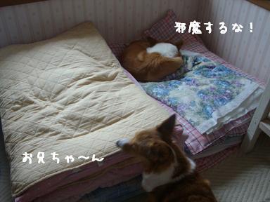 布団寝紋兄と杏