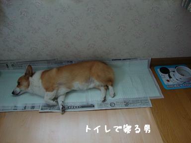 トイレで寝る紋兄