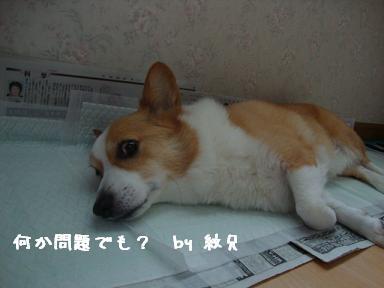 トイレで寝る紋兄2