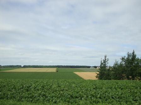 お向かいの畑