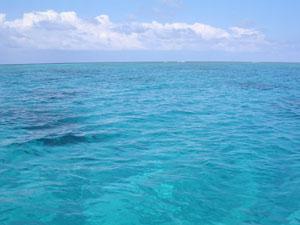 サンゴ礁-1