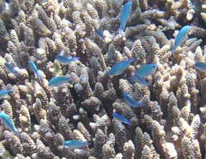 熱帯魚拡大1