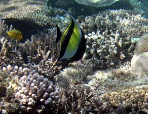 熱帯魚拡大2
