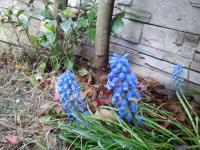2011-04-23_16_53_28_convert_20110425213925.jpg