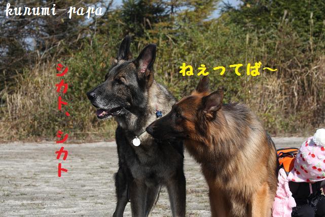 2009 霧ヶ峰 075