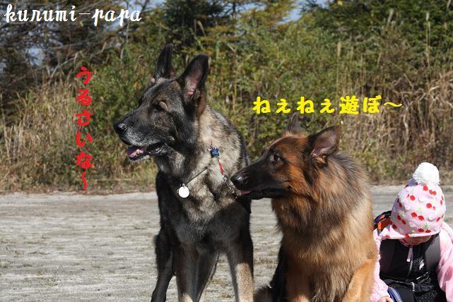 2009 霧ヶ峰 074