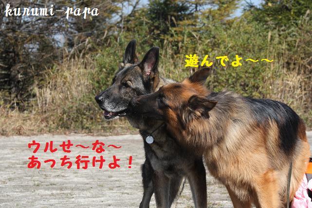 2009 霧ヶ峰 078