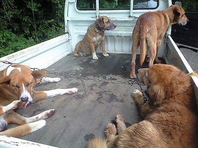 森のたね 富士山田舎暮らし 猟犬