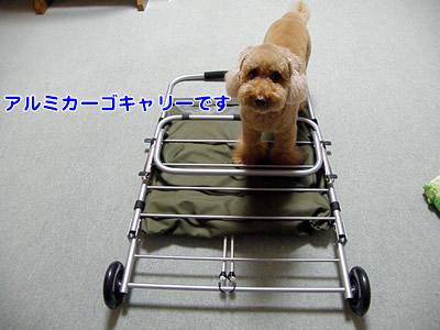 200901001_1.jpg
