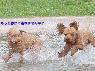 20090808_9.jpg