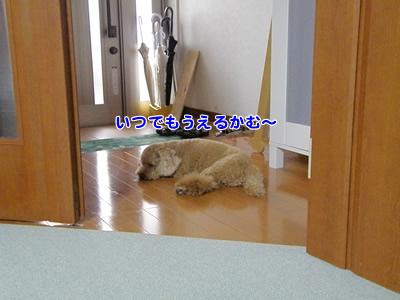 20090809_1.jpg