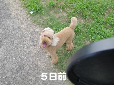 20090818_2.jpg