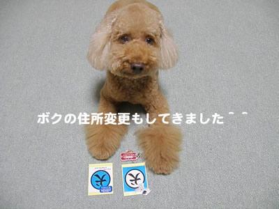 20090826_8.jpg