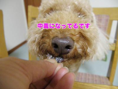 20090830_10.jpg