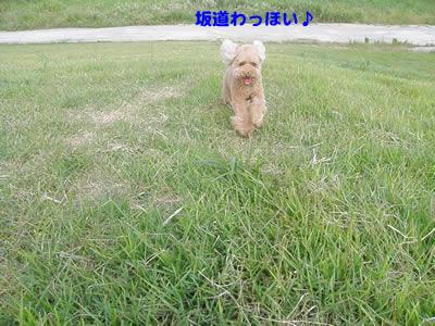 20090917_2.jpg