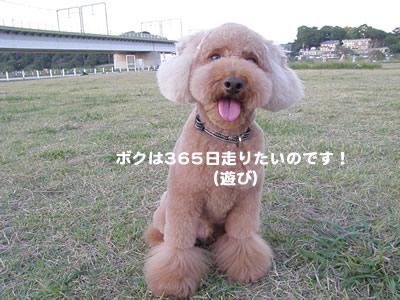 20090929_7.jpg