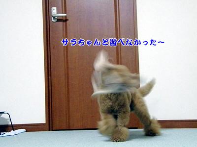 20091023_9.jpg